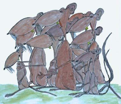 Ratten treten in Massen auf